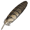 Long Eared Owl Feather