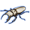 Beetle: Homoderus mellyi [White]