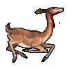 Gerenuk Carcass
