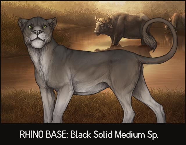 2019-march-rhino.jpg