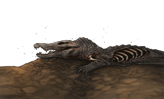 The rotted, dehydrated carcass of a crocodile lays on a dried river bed.