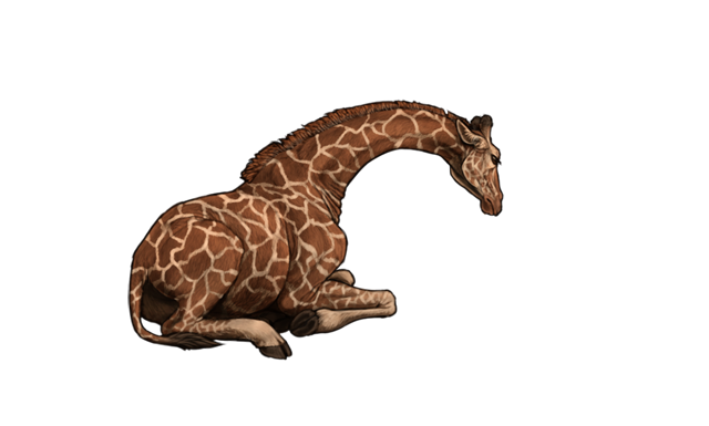 An adult giraffe is collapsed on the ground, exhausted and close to death.