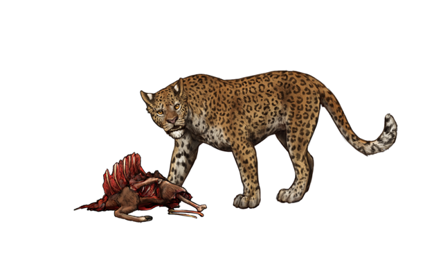 On the ground lays a fresh, half-eaten carcass.  A male leopard stands over it to establish the carcass as his.