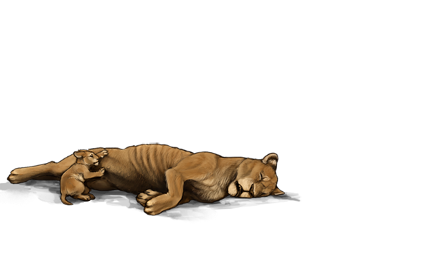 An emaciated lioness lies on the ground.  Her face indicates she is exhausted and succumbing to death.  A tiny lion cub is attempting to nurse from her.