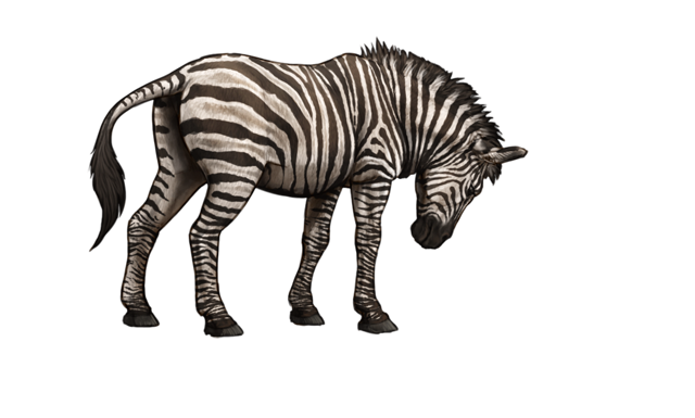 A forlorn, dehydrated zebra searches for water.