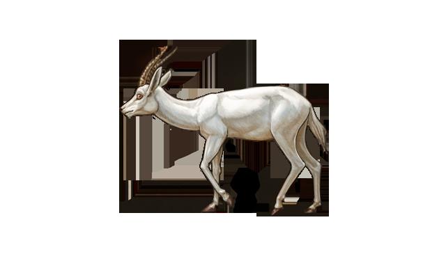 albinogazelleday.png