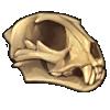 cheetahskull.png