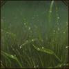 RainShelter.png