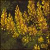 herbgrove.png