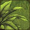 RainforestShrubsL.png