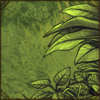 RainforestShrubsR.png