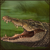 RestingCrocodile.png