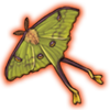 africanmoonmoth.png