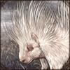 albinoporcupine.png