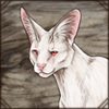 albinoserval.png