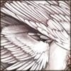 albinowings.png