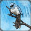 blueflycatcher.png