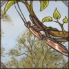 brownmantisonbranch.png
