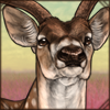 chital.png