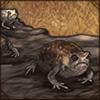 commonrainfrog.png