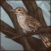 deertushrattlingbird.png