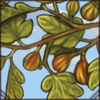 figtreebranch.png