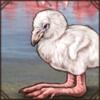 flamingochick.png
