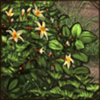forestunderbrush.png