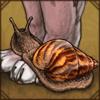 gianttigersnail.png