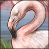 greaterflamingo.png