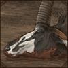 muddysablecarcass.png