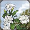 sambacjasmine.png