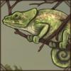 shorthornedchameleon.png