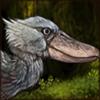 wanderingshoebill.png