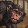 westernchimpanzee.png