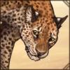 zanzibarleopard.png