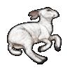 Lamb Carcass.