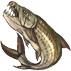 tigerfish.png