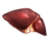 humanliver.png
