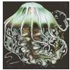 jellyfish.png