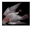 speckledpigeon.png
